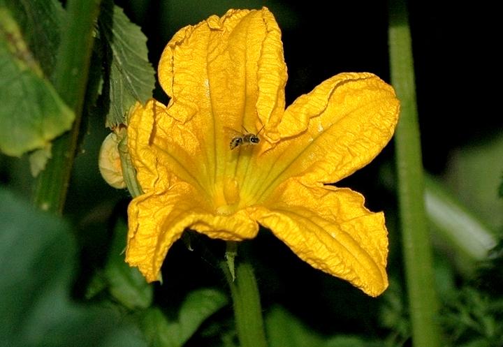 zbuzzinbee