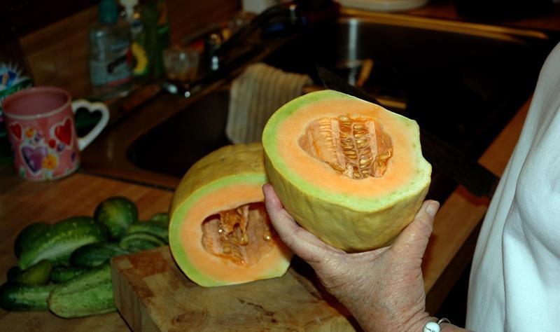 B-8 Melon Cutx
