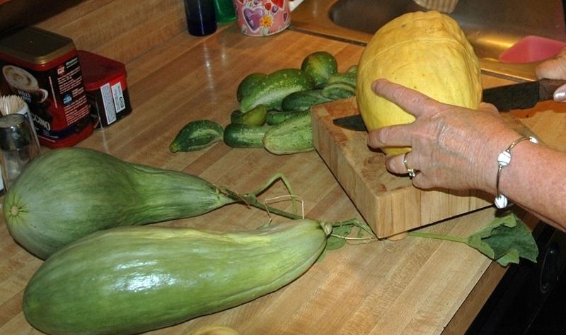 B-9 Melon Cut 2x